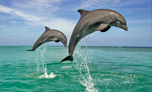 swim with dolphin mauritius