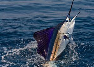 Deep Sea Fishing In Mauritius Island