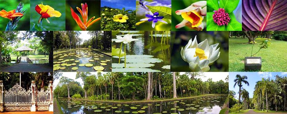 Jardin botanique de pamplemousses a l 39 ile maurice for Jardin pamplemousse