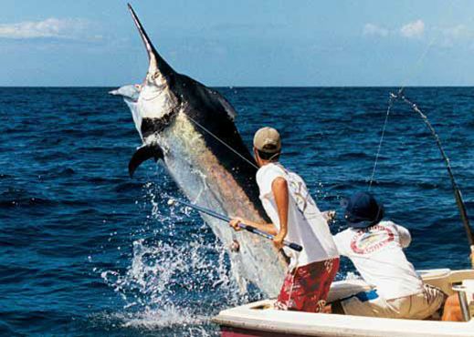 Mauritius leisure for Big game fishing