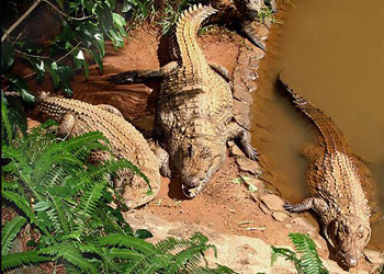 crocodile park mauritius