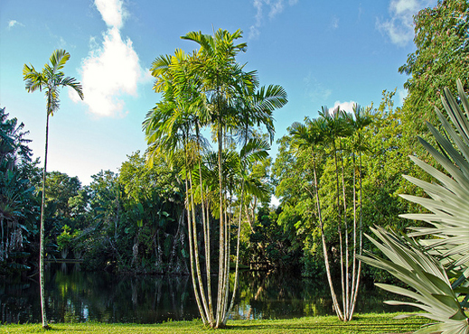 pamplemousses garden mauritius